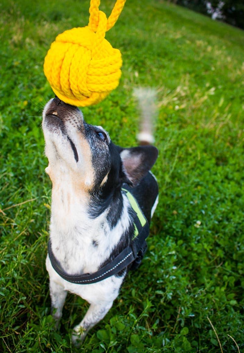 Anzeige - DIYs für Hunde im Fressnapf Magazin 2